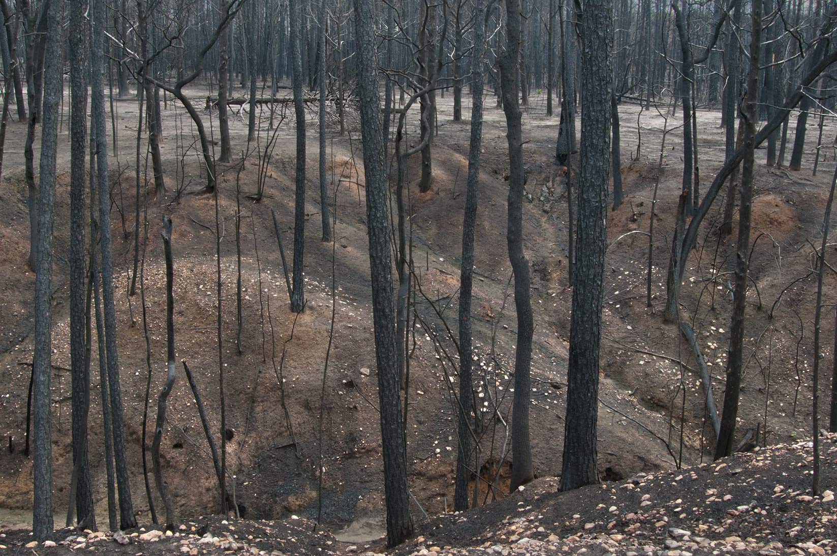 Burnt creek near Lost Pines Overlook cleaned by fire in Bastrop State Park. Bastrop, Texas