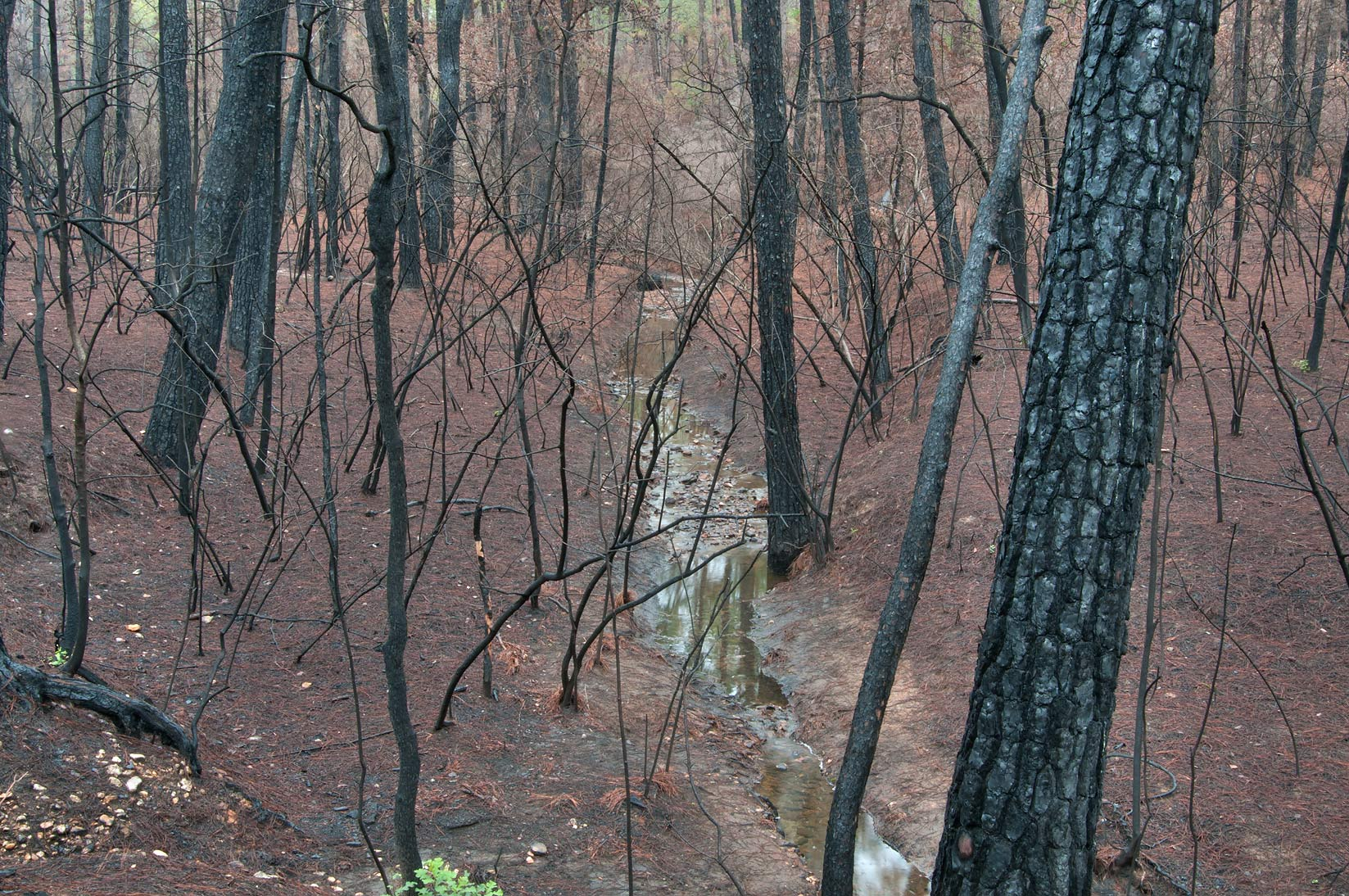A creek along Scenic Overlook Trail in Bastrop State Park. Bastrop, Texas