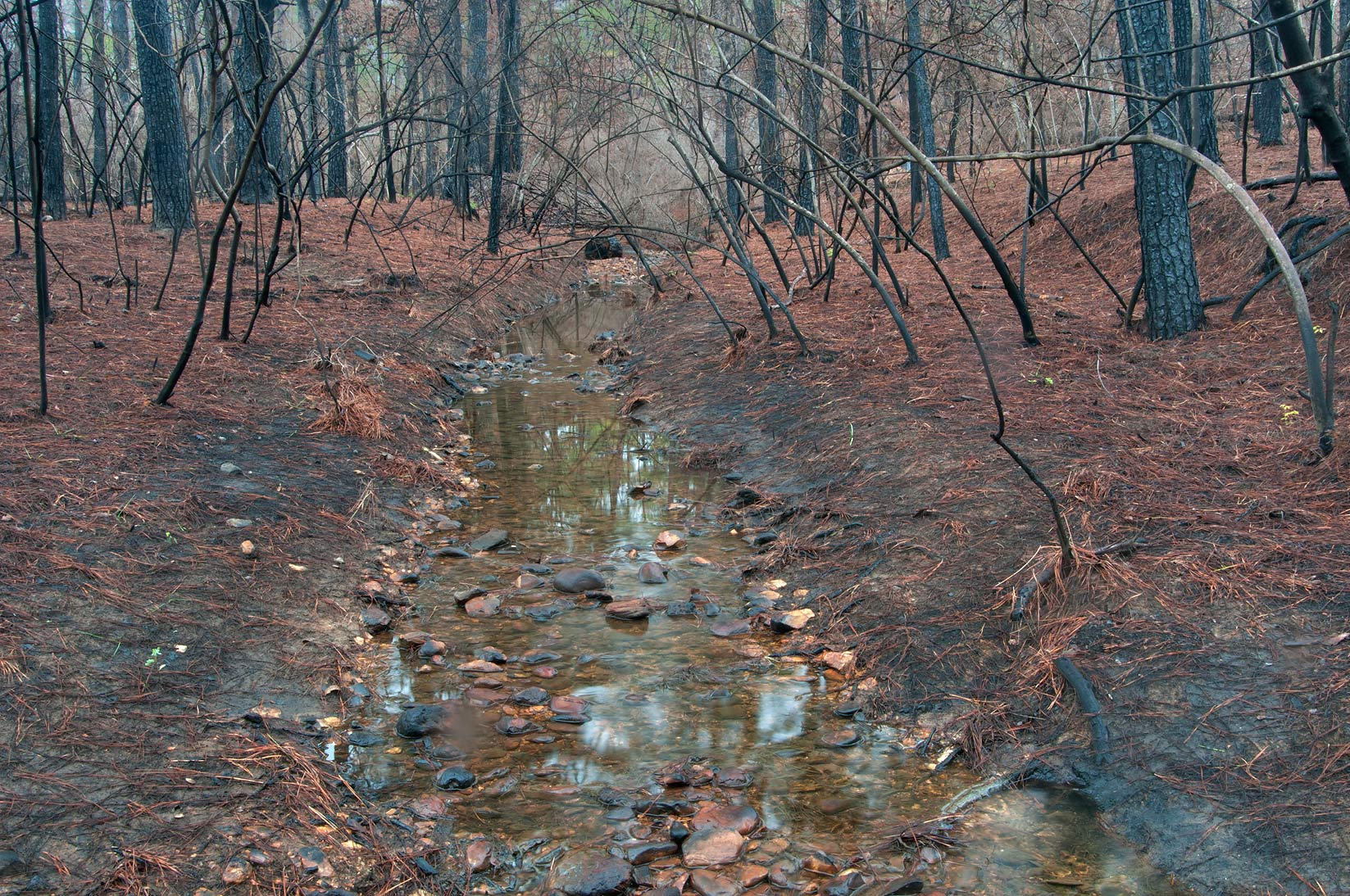Burnt creek near Scenic Overlook Trail in Bastrop State Park. Bastrop, Texas