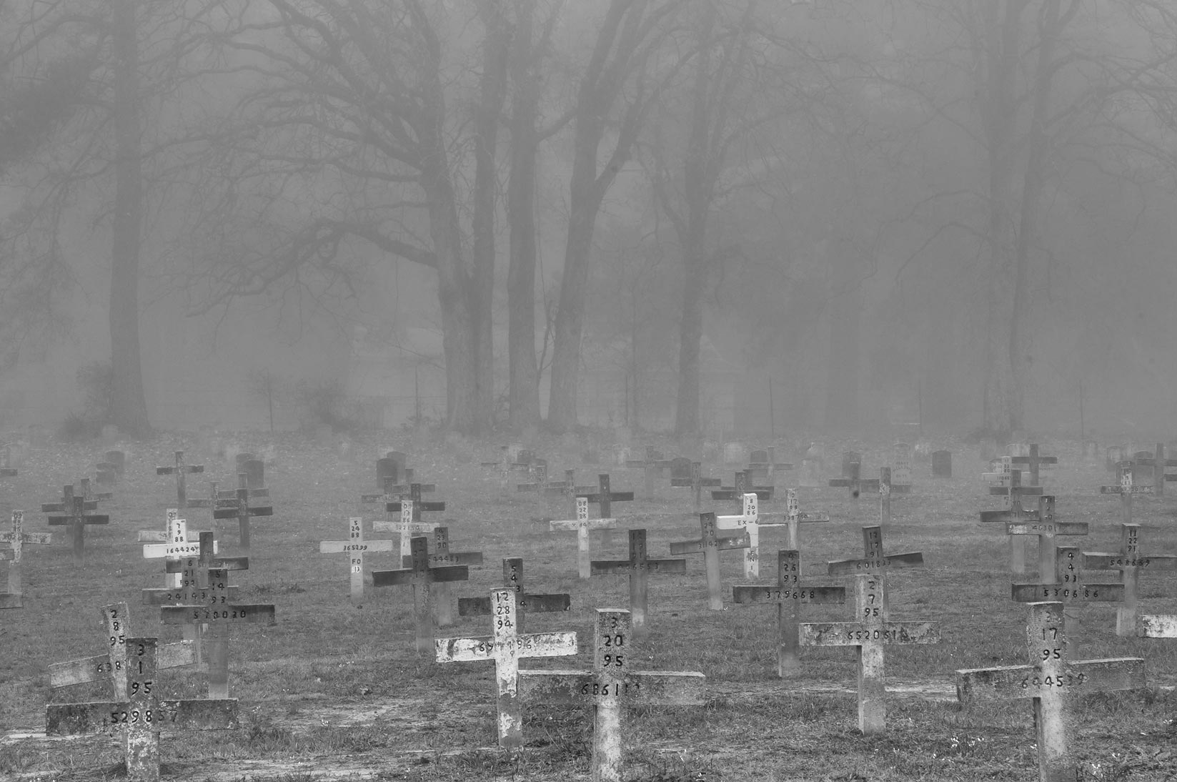 Crosses of TDCJ Captain Joe Byrd (Peckerwood Hill) Cemetery in fog. Huntsville, Texas