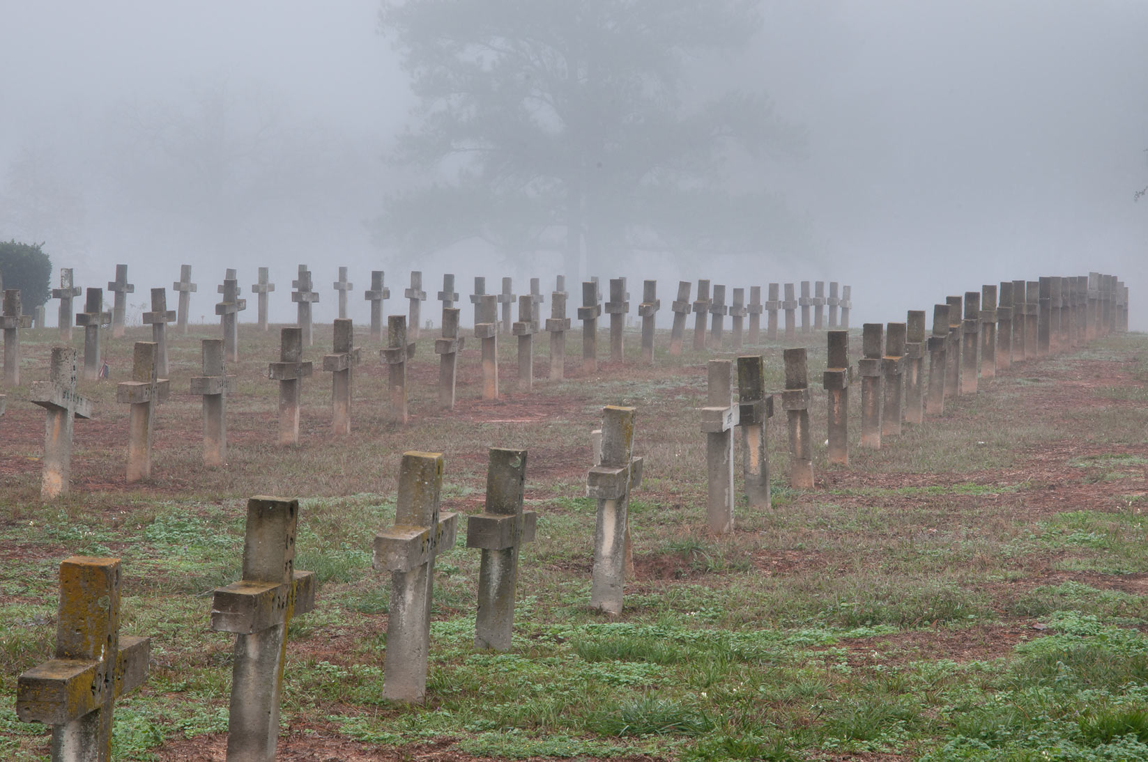 Aligned crosses of TDCJ Captain Joe Byrd...Cemetery in fog. Huntsville, Texas