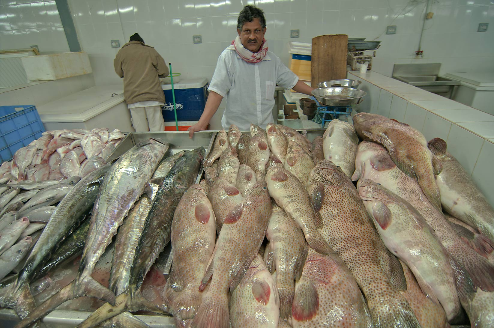 Doha, Education City-Markets, Qatar  - Wholesale Fish Market. Doha, Qatar