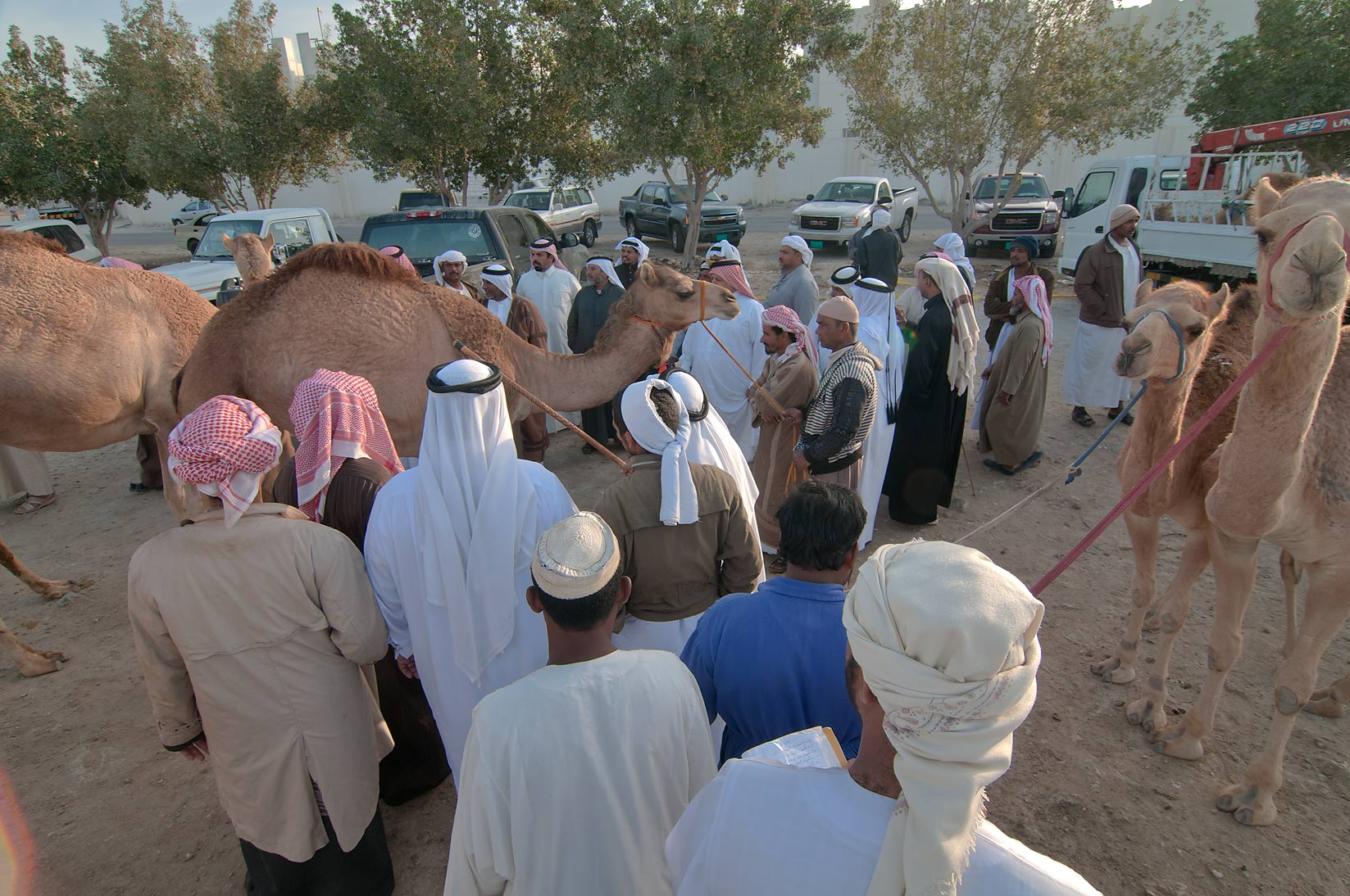 Gathering at Camel Market (Souq), for racing. Doha, Qatar