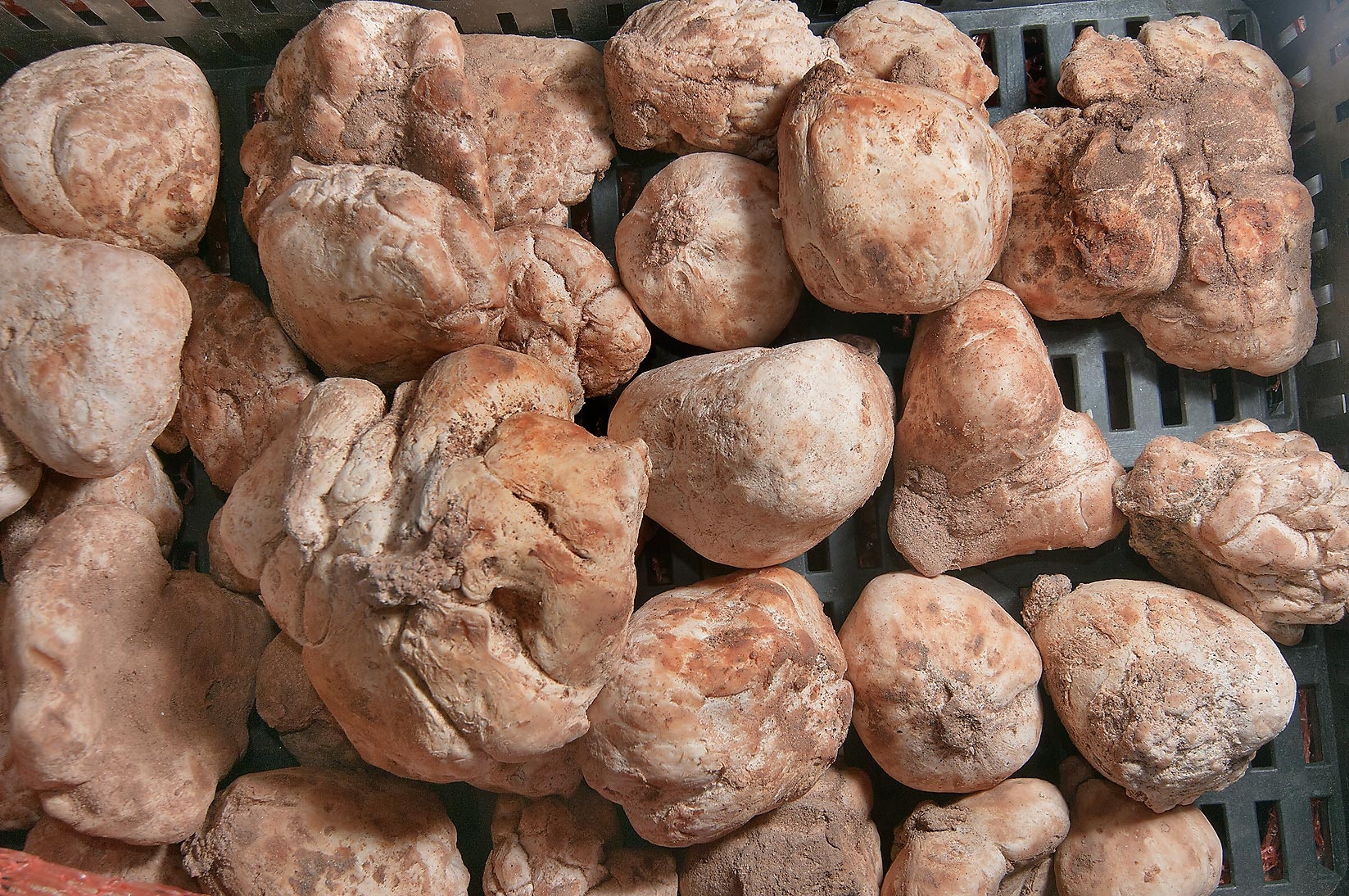 Irregularly shaped desert truffles (faqah) in Omani Market. Doha, Qatar