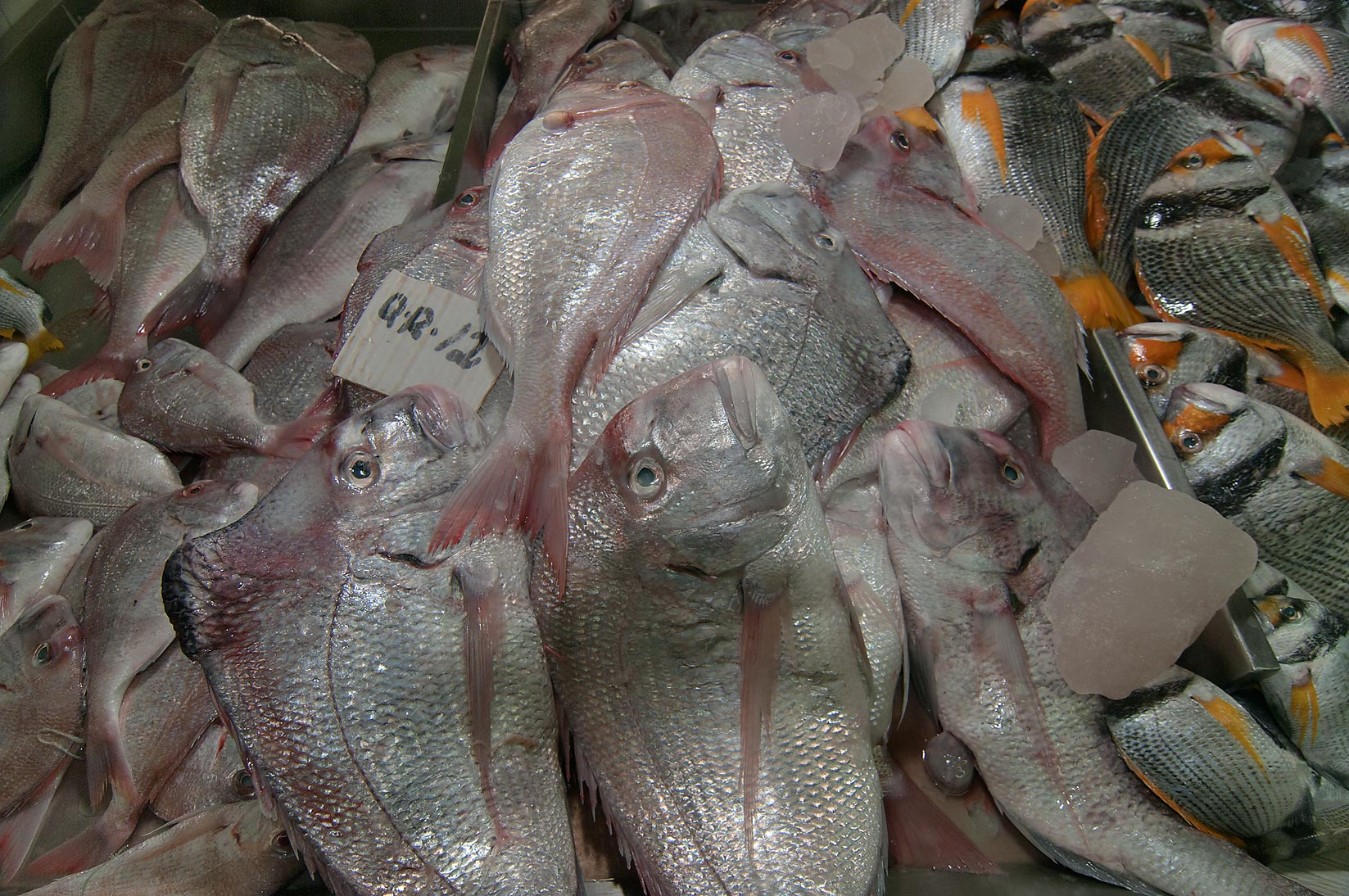 Photo 1016 16 humped fish king soldier bream kufar for Wholesale fish market near me