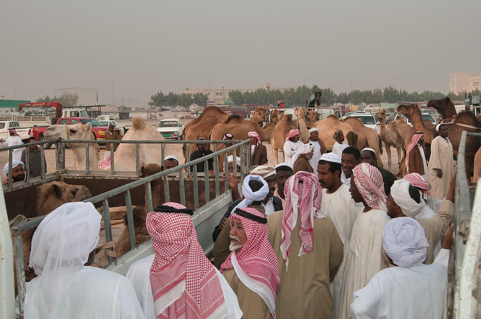 Gathering in racing section of Camel Market (Souq). Doha, Qatar