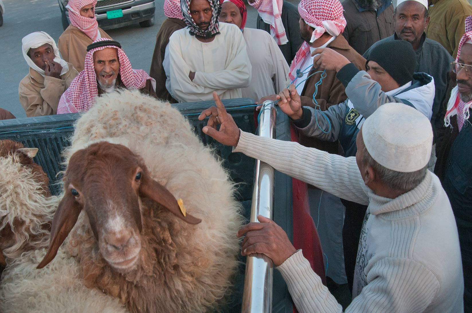 Selling sheep on auction in Wholesale Animal Market. Doha, Qatar
