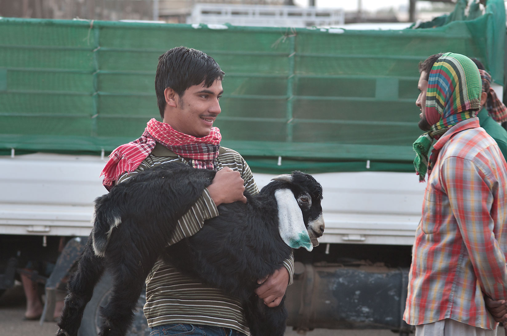 A person carrying Najdi goat in Sheep Market, Wholesale Markets area. Doha, Qatar
