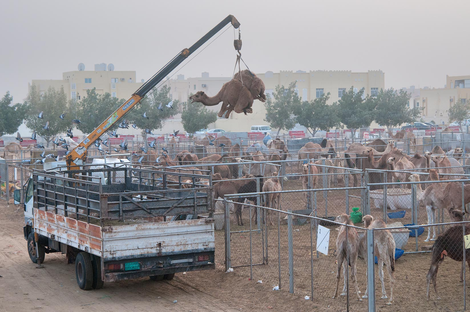 A crane plucking a camel in the air in Camel Souq in Wholesale Markets area. Doha, Qatar