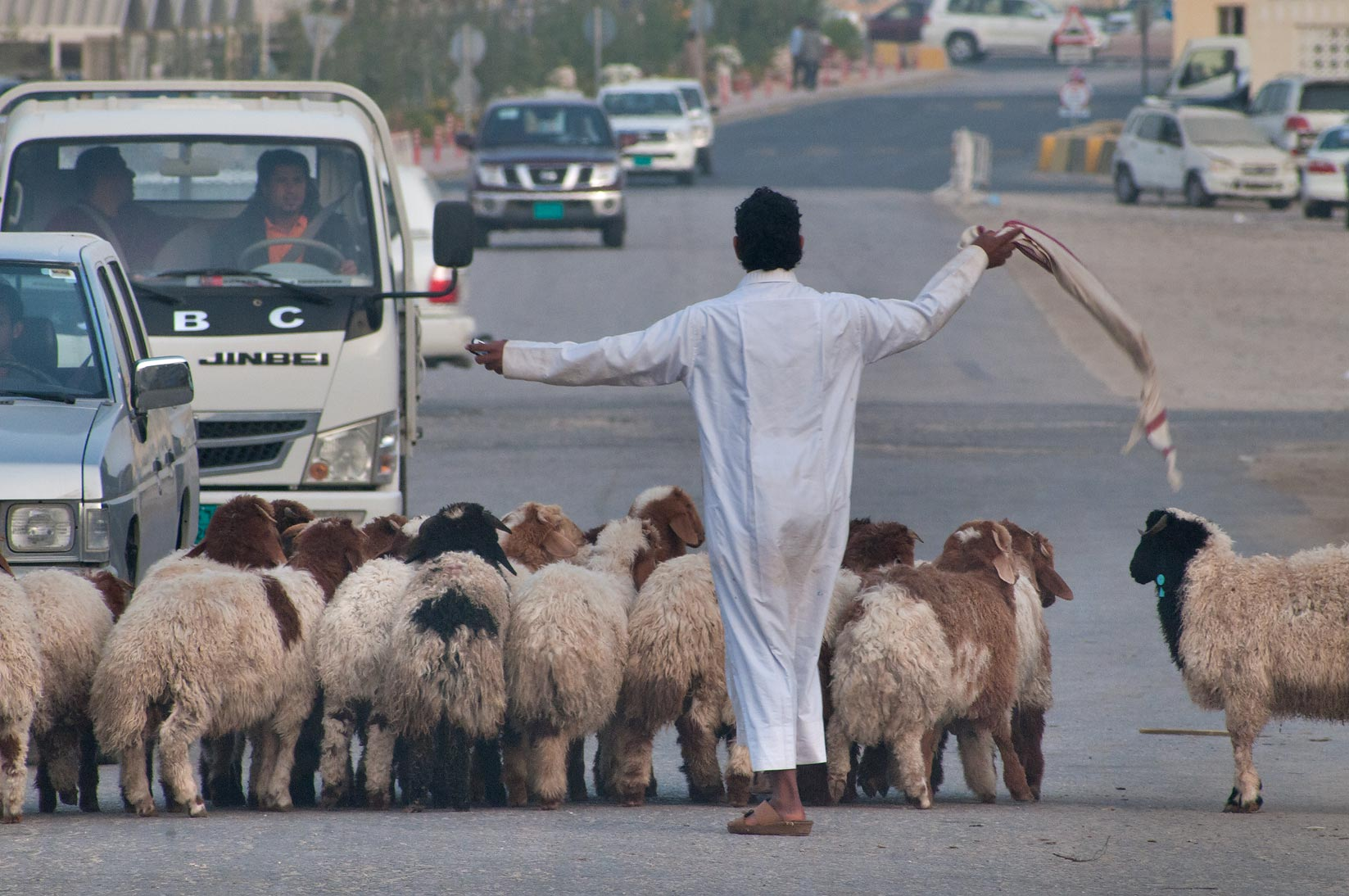 Herd of sheep crossing a road in Animal Market, Wholesale Markets area. Doha, Qatar