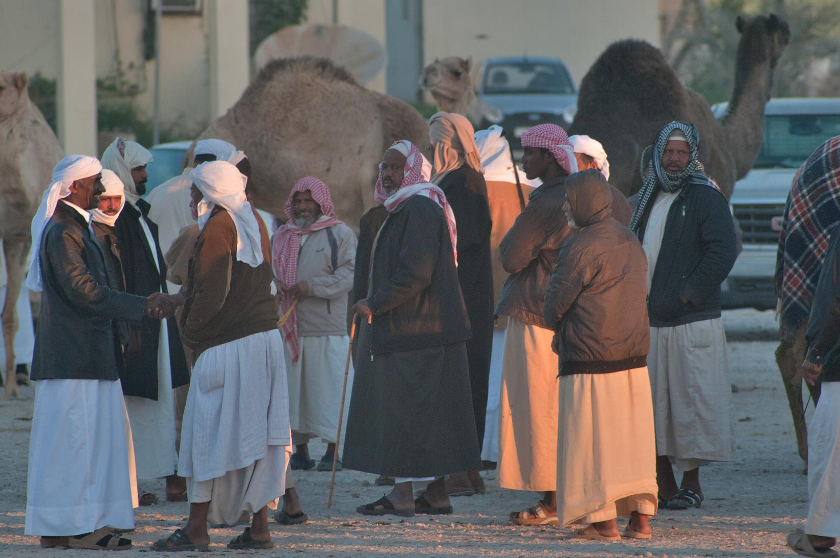 Morning gathering at Camel Market (Souq), in racing section. Doha, Qatar