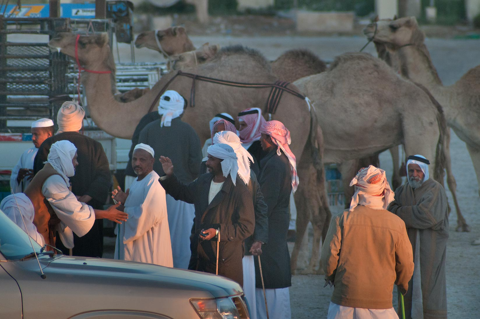 Morning gathering at Camel Market, racing section. Doha, Qatar