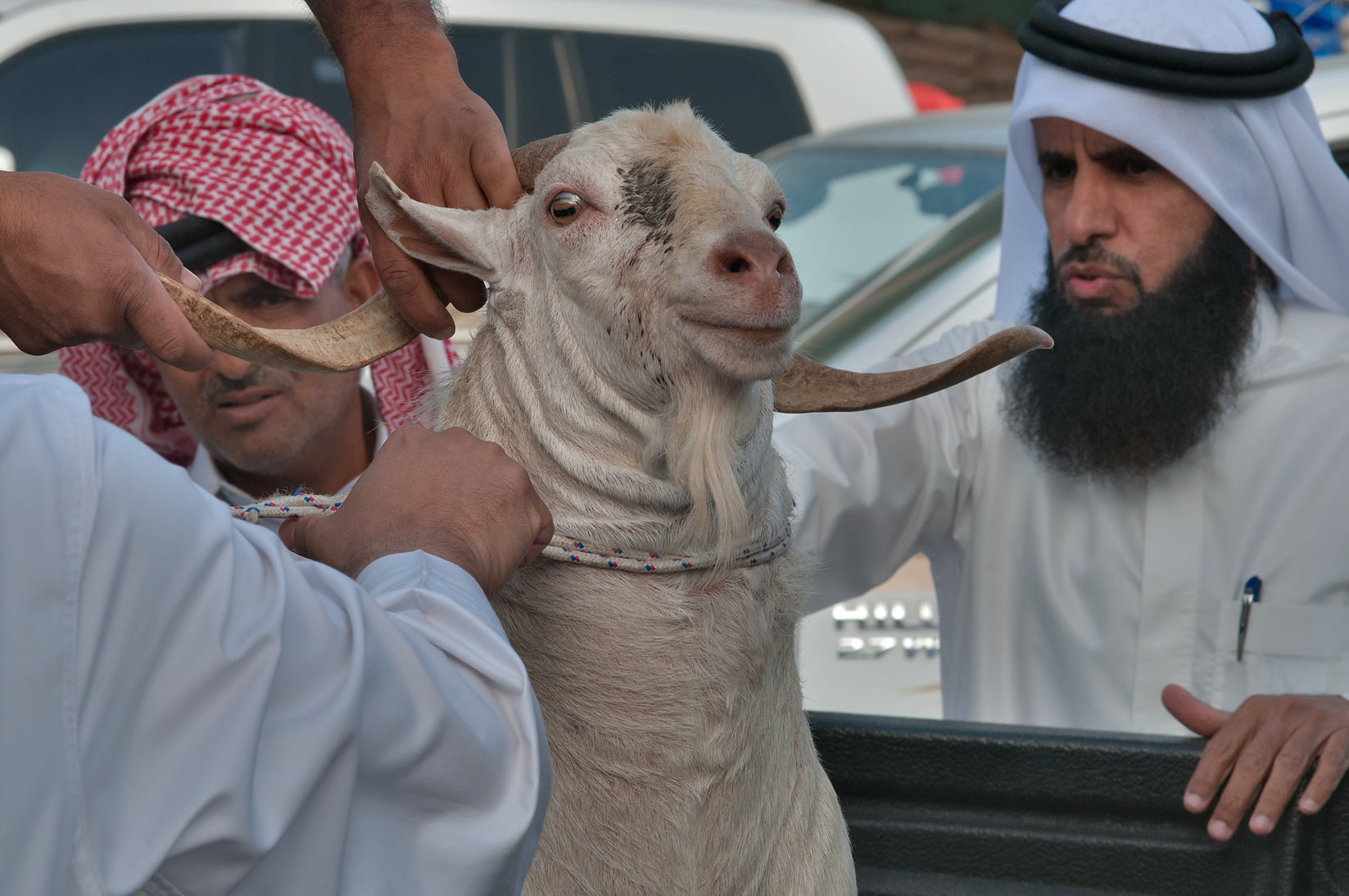 Buying a white goat in Sheep Market, Wholesale Market area. Doha, Qatar