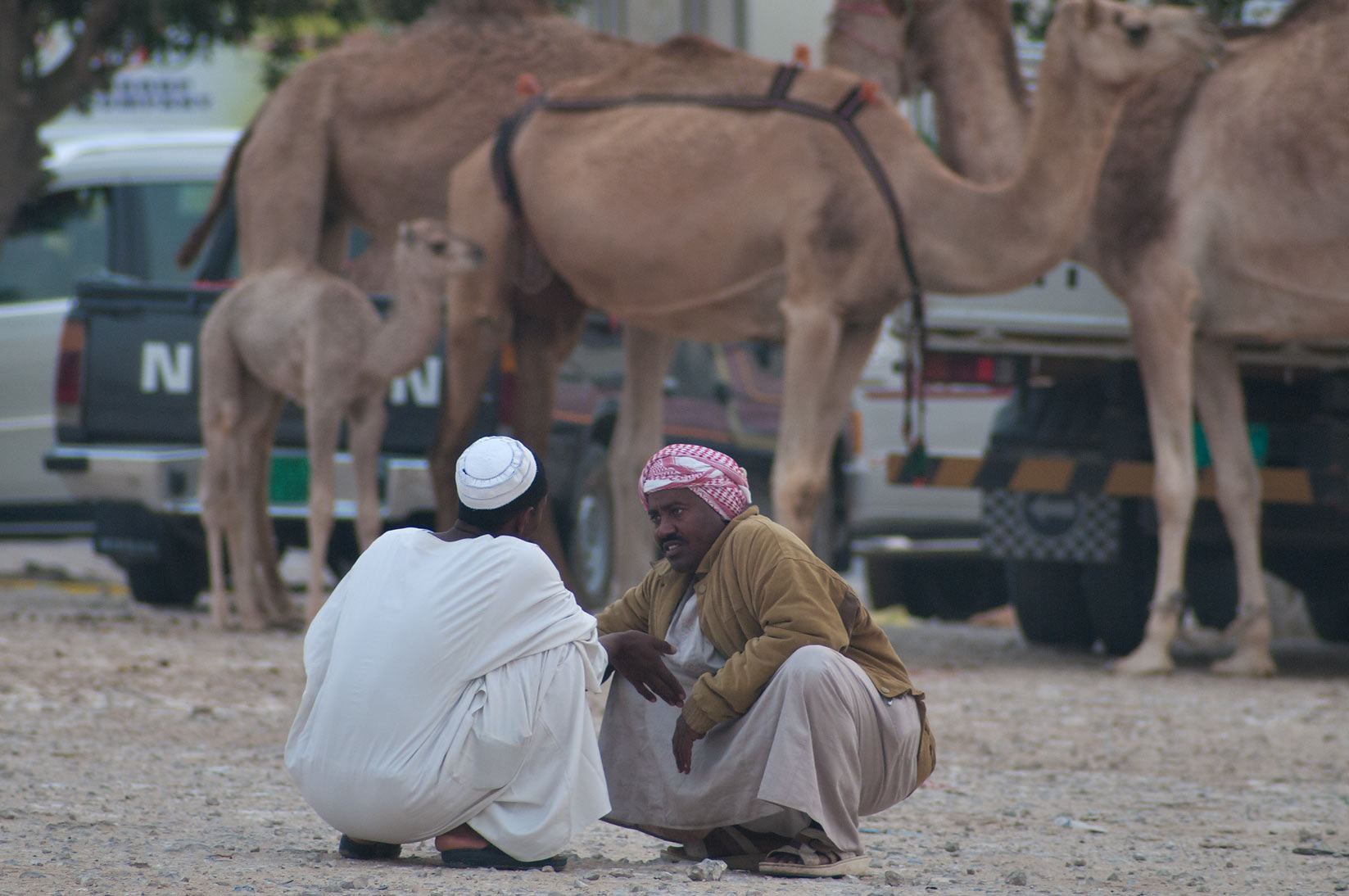 Gathering in Camel Market, wholesale markets area. Doha, Qatar