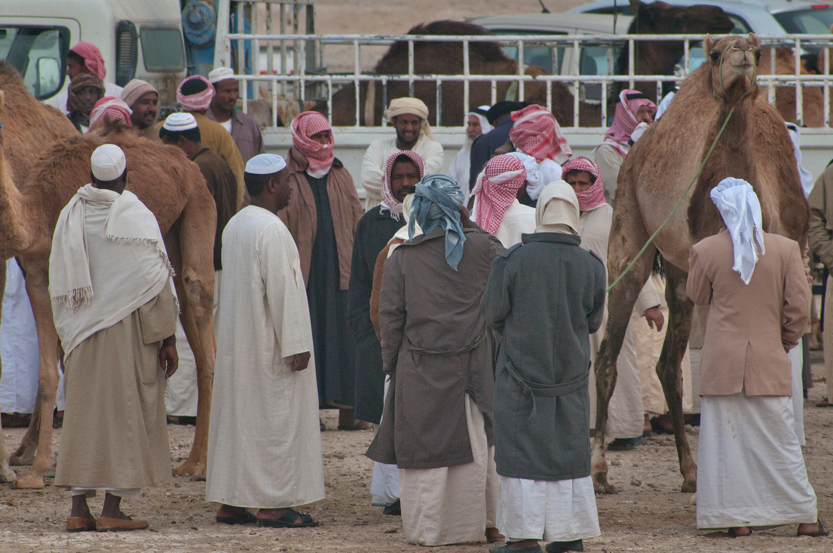 Gathering in racing section of Camel Market, wholesale markets area. Doha, Qatar