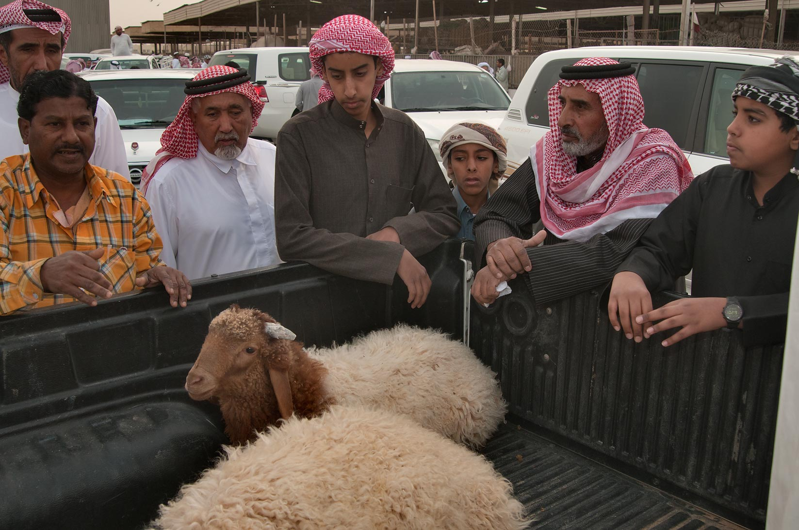 Gathering around an animal in a truck in Sheep Market, Wholesale Markets area. Doha, Qatar