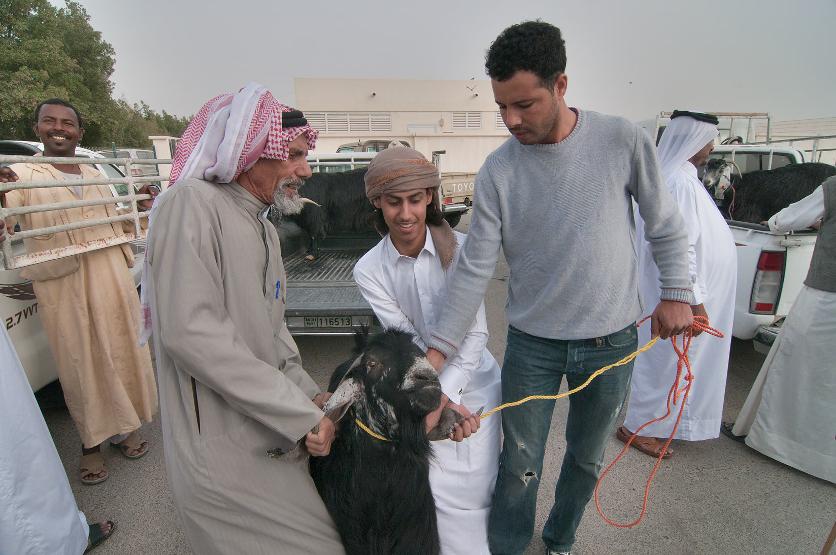 Pulling black goat in Sheep Market, Wholesale Markets area. Doha, Qatar