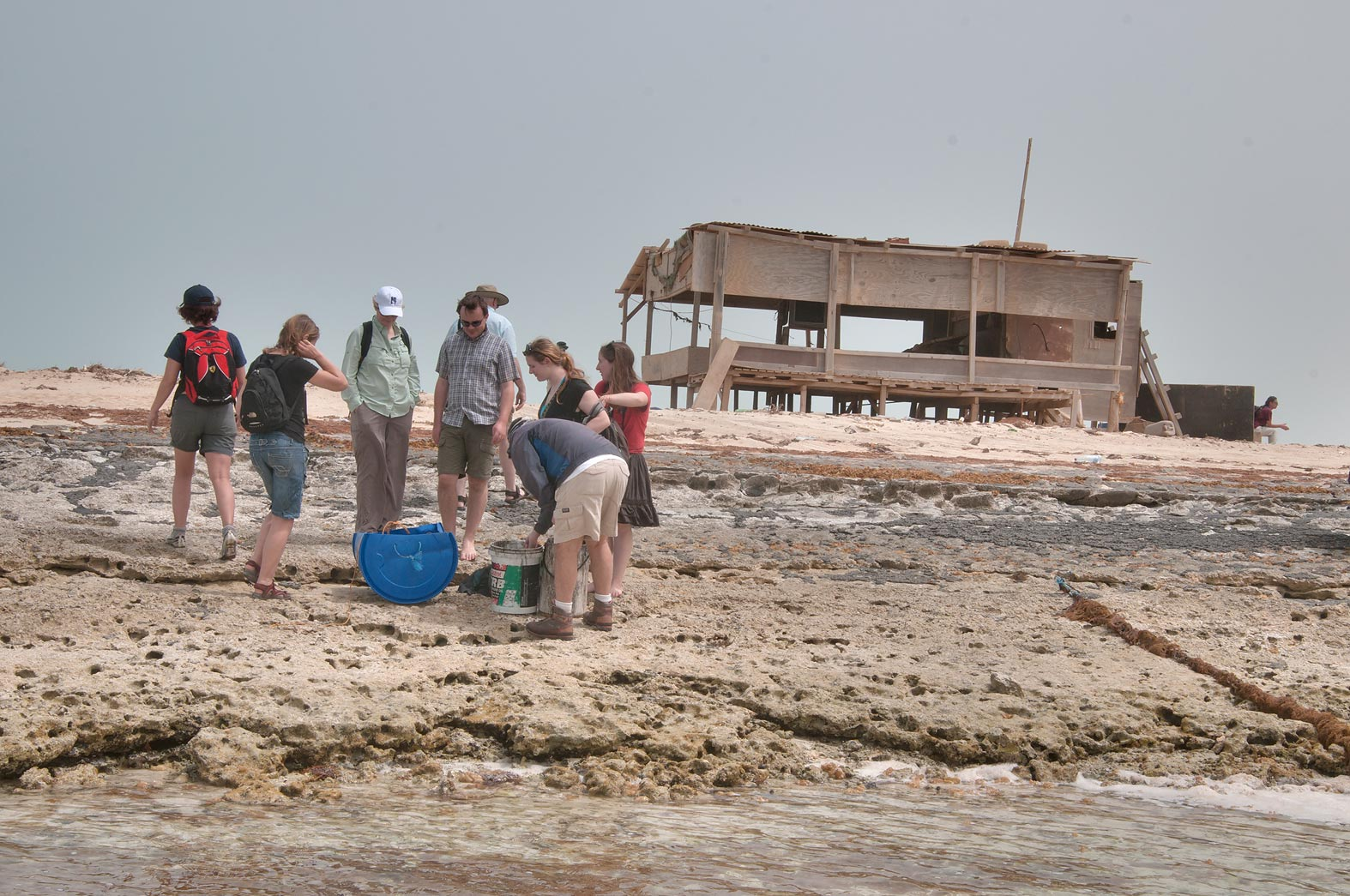 Qatar Natural History Group (QNHG) near a fishing...tip of Qatar, east from Ruwais