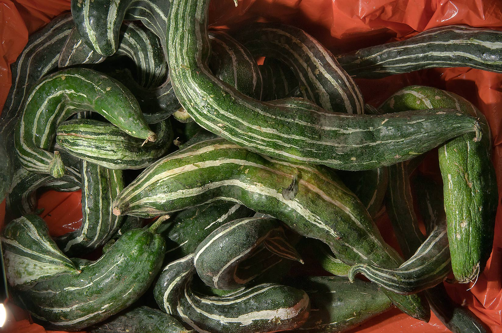 Fruits of snake gourd (padwal, Trichosanthes...Wholesale Markets area. Doha, Qatar