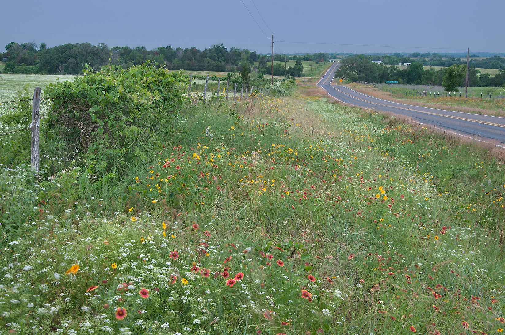 Road FM 390 south from Lake Somerville. Texas