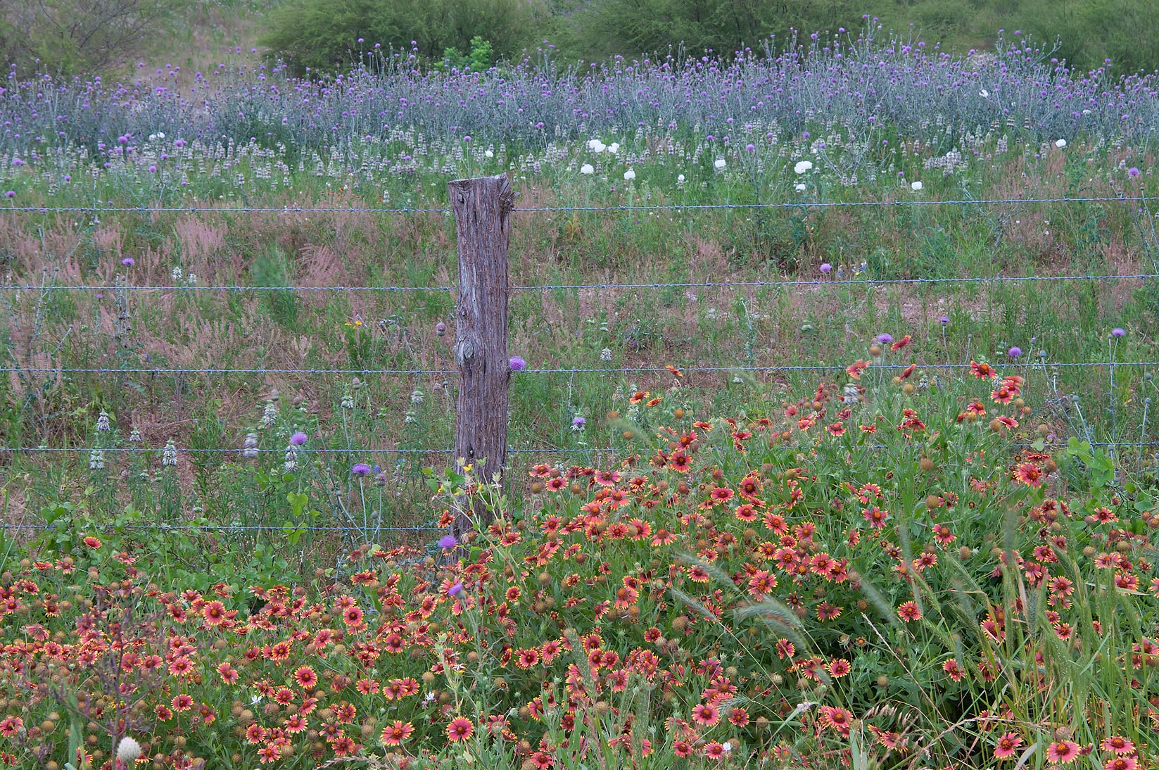 Fenced field near Rd. FM 390 south from Lake Somerville. Texas