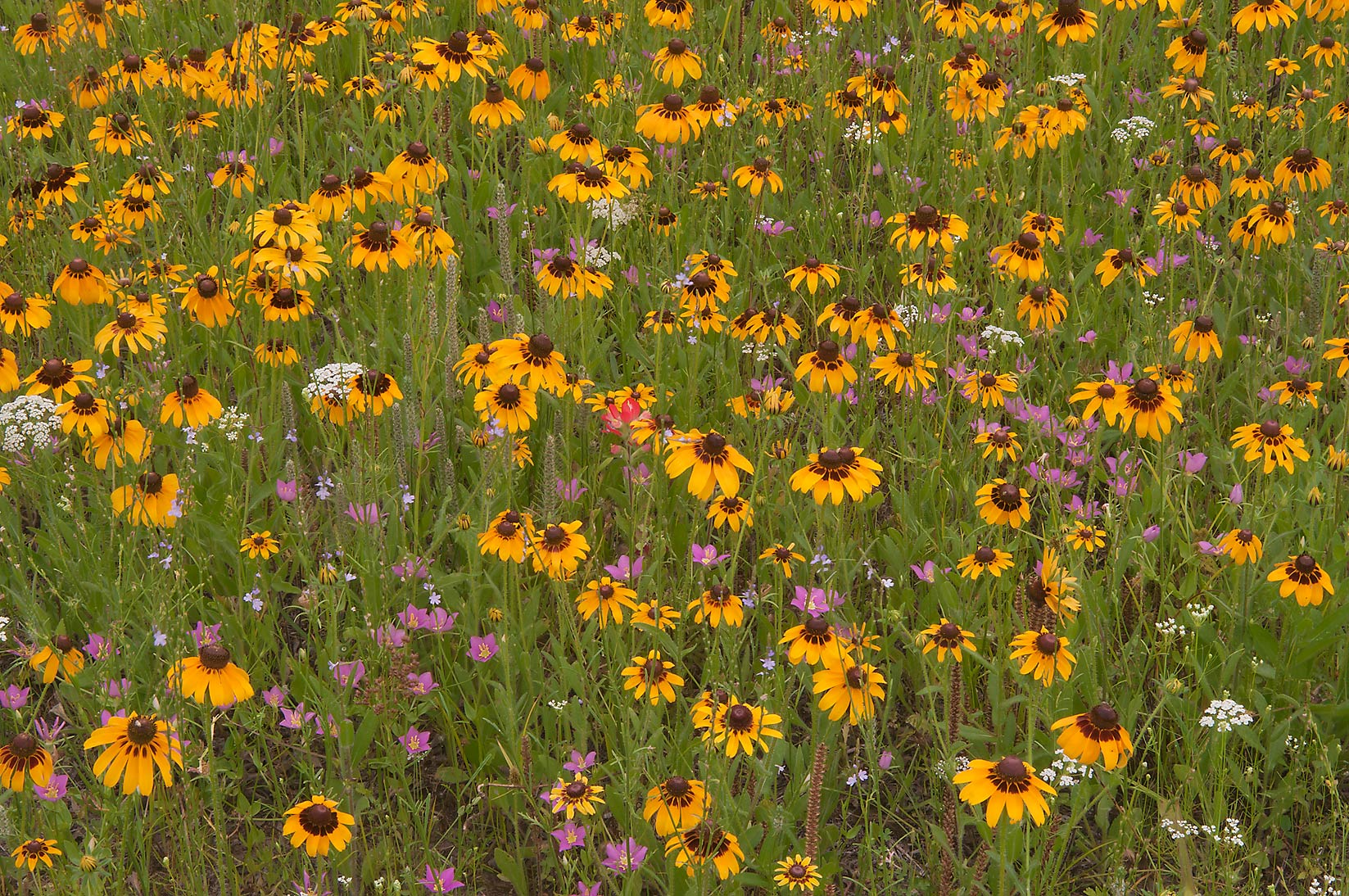 Various flowers near equestrian entrance in Lick Creek Park. College Station, Texas