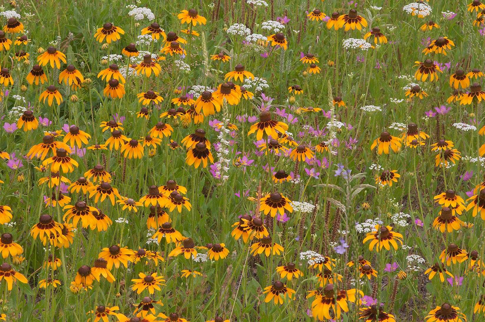 Field of various flowers near equestrian entrance...Creek Park. College Station, Texas