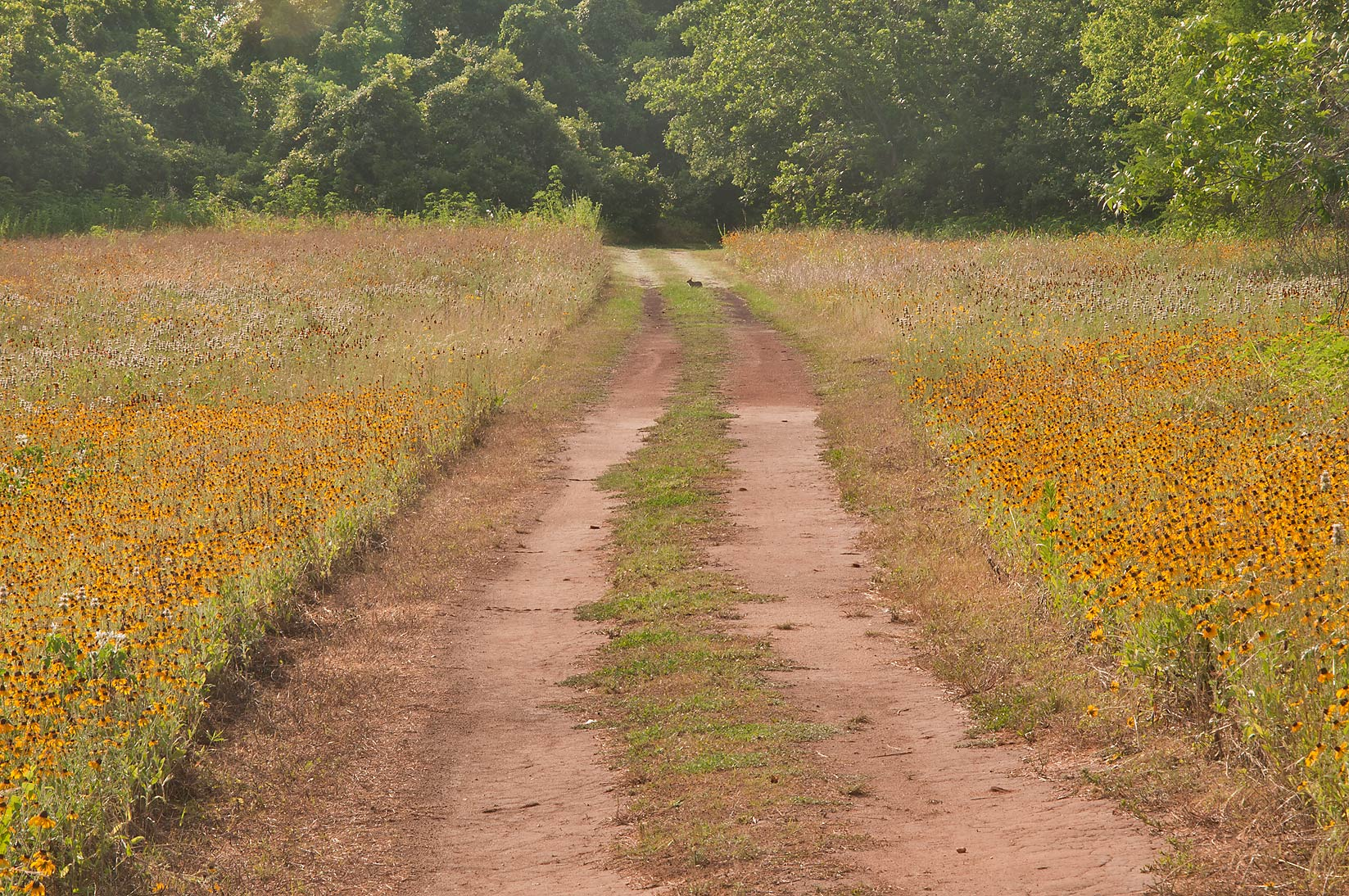 A field near Loop Trail in Washington-on-the-Brazos State Historic Site. Washington, Texas