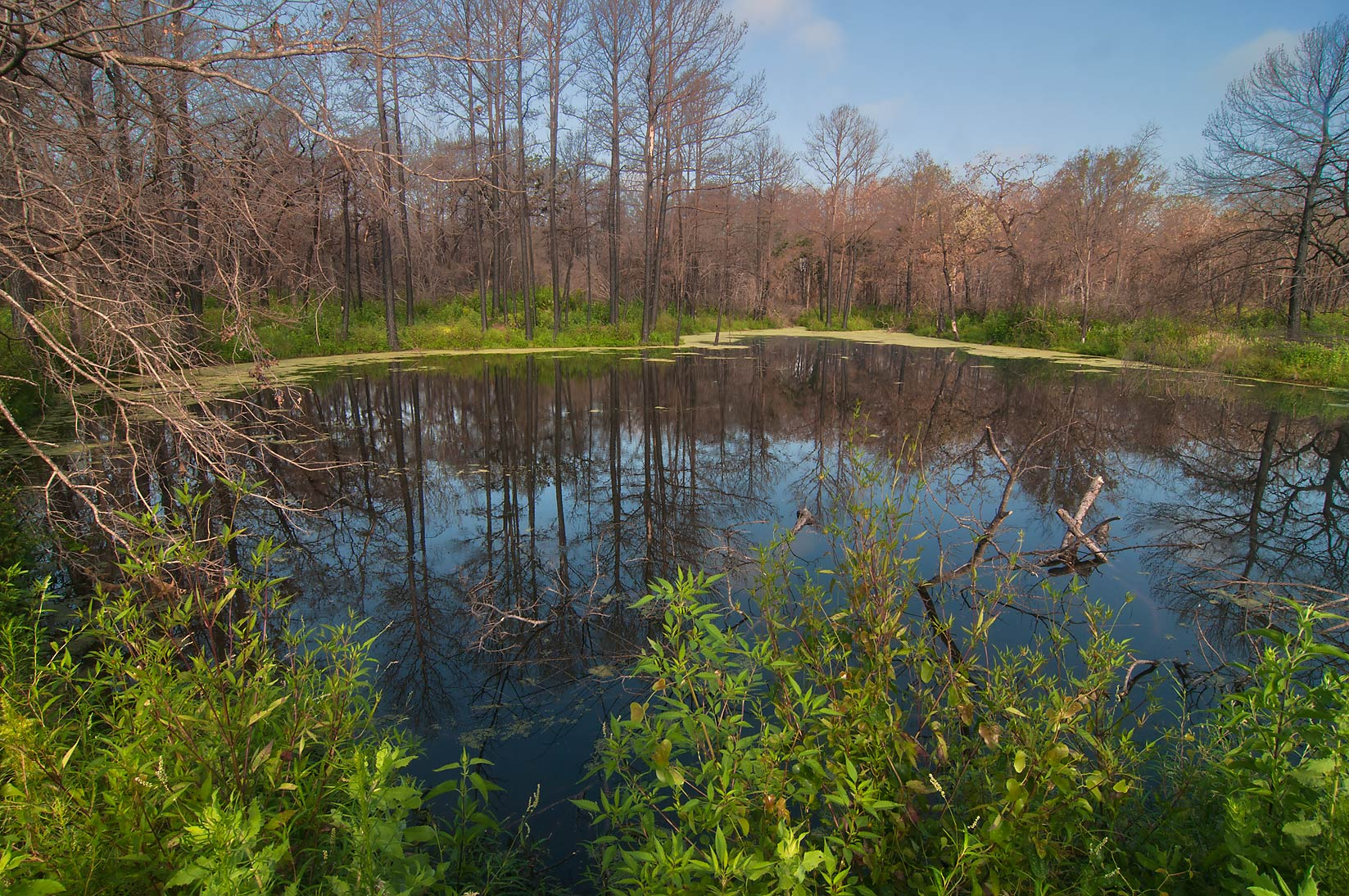 A small pond in a forest in Bastrop State Park. Bastrop, Texas