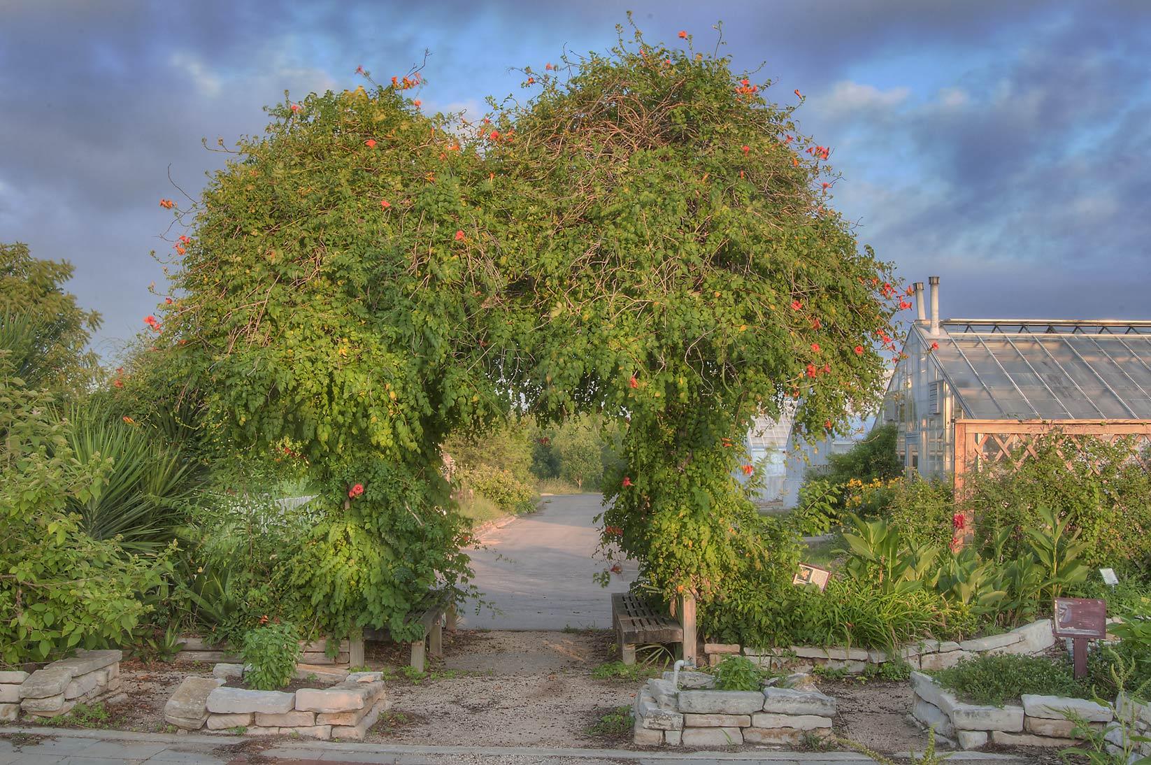 Photo 1071 16 Arbor In Tamu Holistic Garden In Texas A M