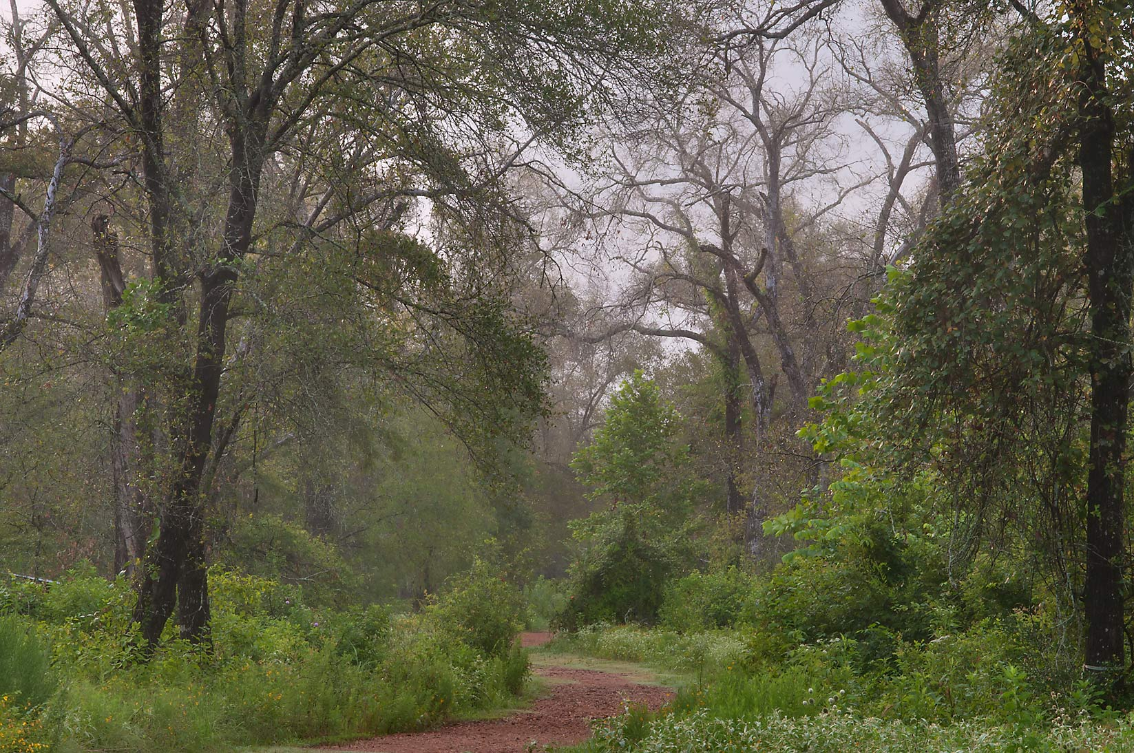 Iron Bridge Trail in Lick Creek Park. College Station, Texas