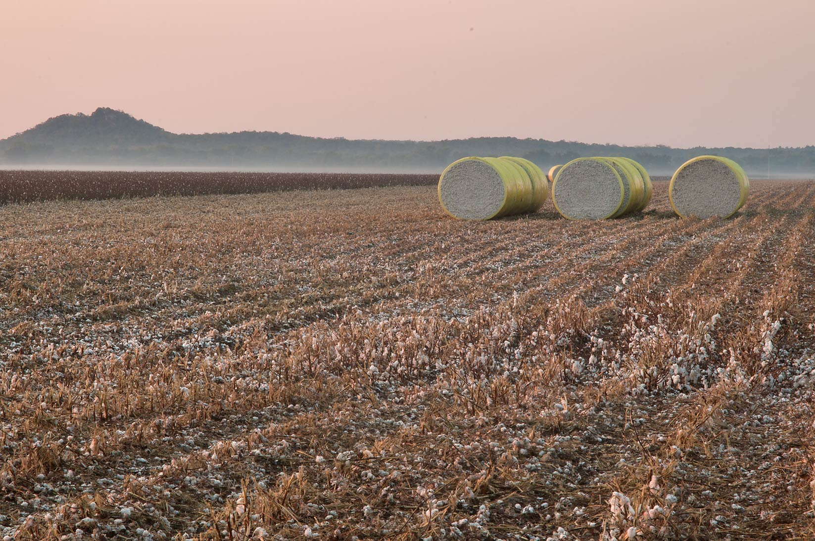 Bails of cotton near CR 264, with Sugarloaf Mountain on horizon. Gause, Texas