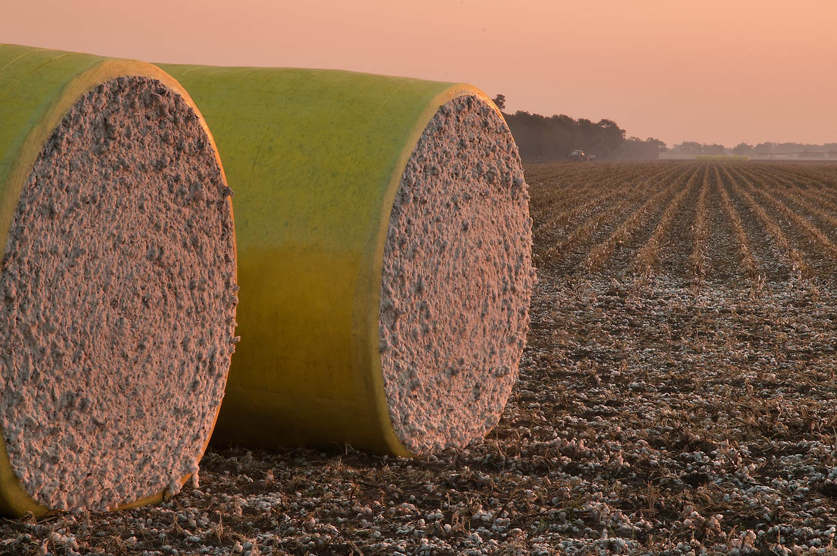 Bails of cotton near CR 264 at sunrise. Gause, Texas