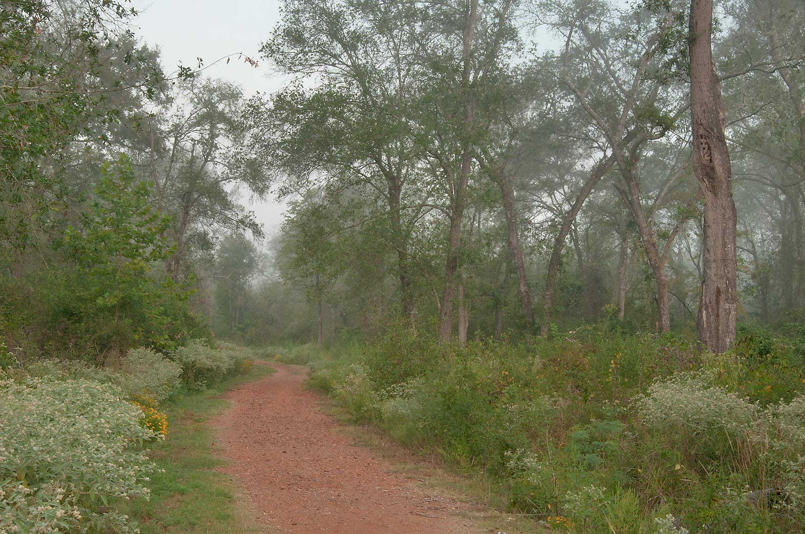 Foggy morning in Lick Creek Park. College Station, Texas