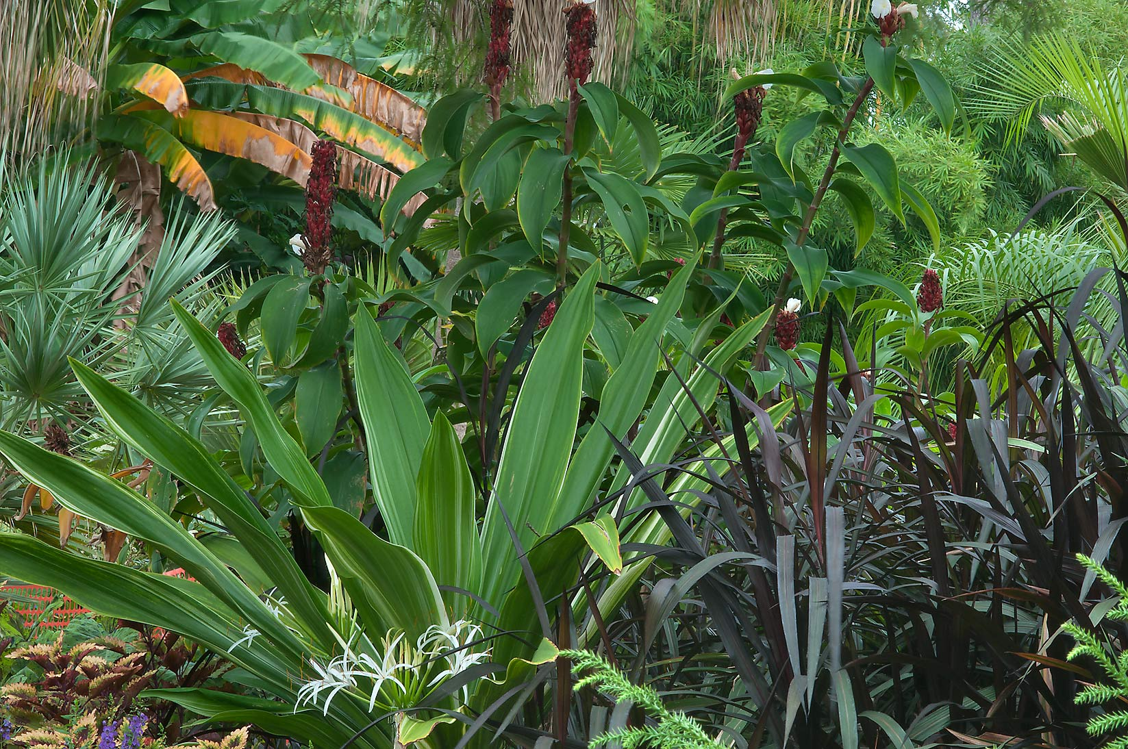 Tropical plants in Mercer Arboretum and Botanical Gardens. Humble (Houston area), Texas