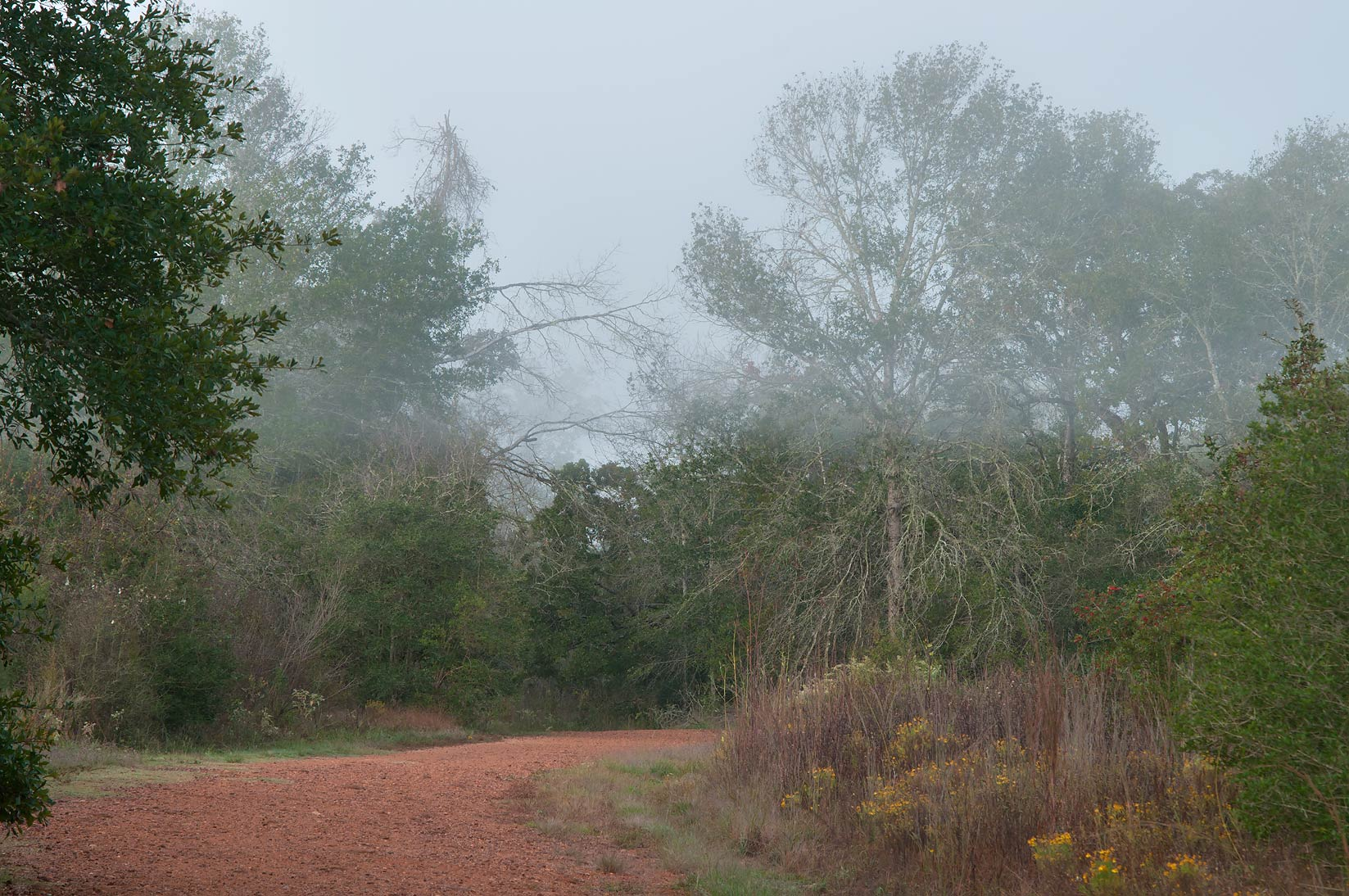 Upper layer of fog on a road in Lick Creek Park. College Station, Texas