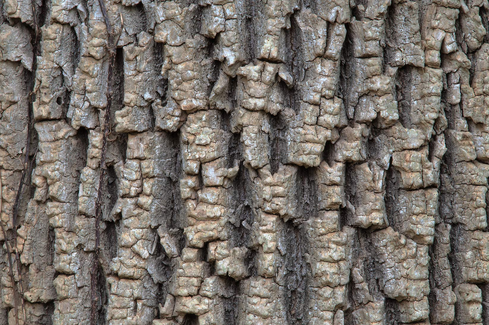 Tree bark on Racoon Run Trail in Lick Creek Park. College Station, Texas