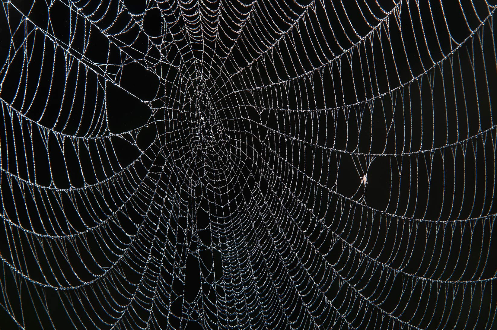 Spider web in fog in Washington-on-the-Brazos State Historic Site. Washington, Texas