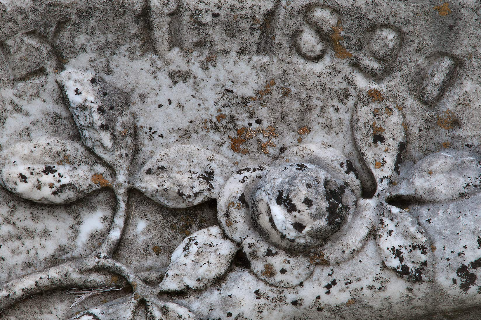 Lichens on stone roses in City Cemetery. Bryan, Texas