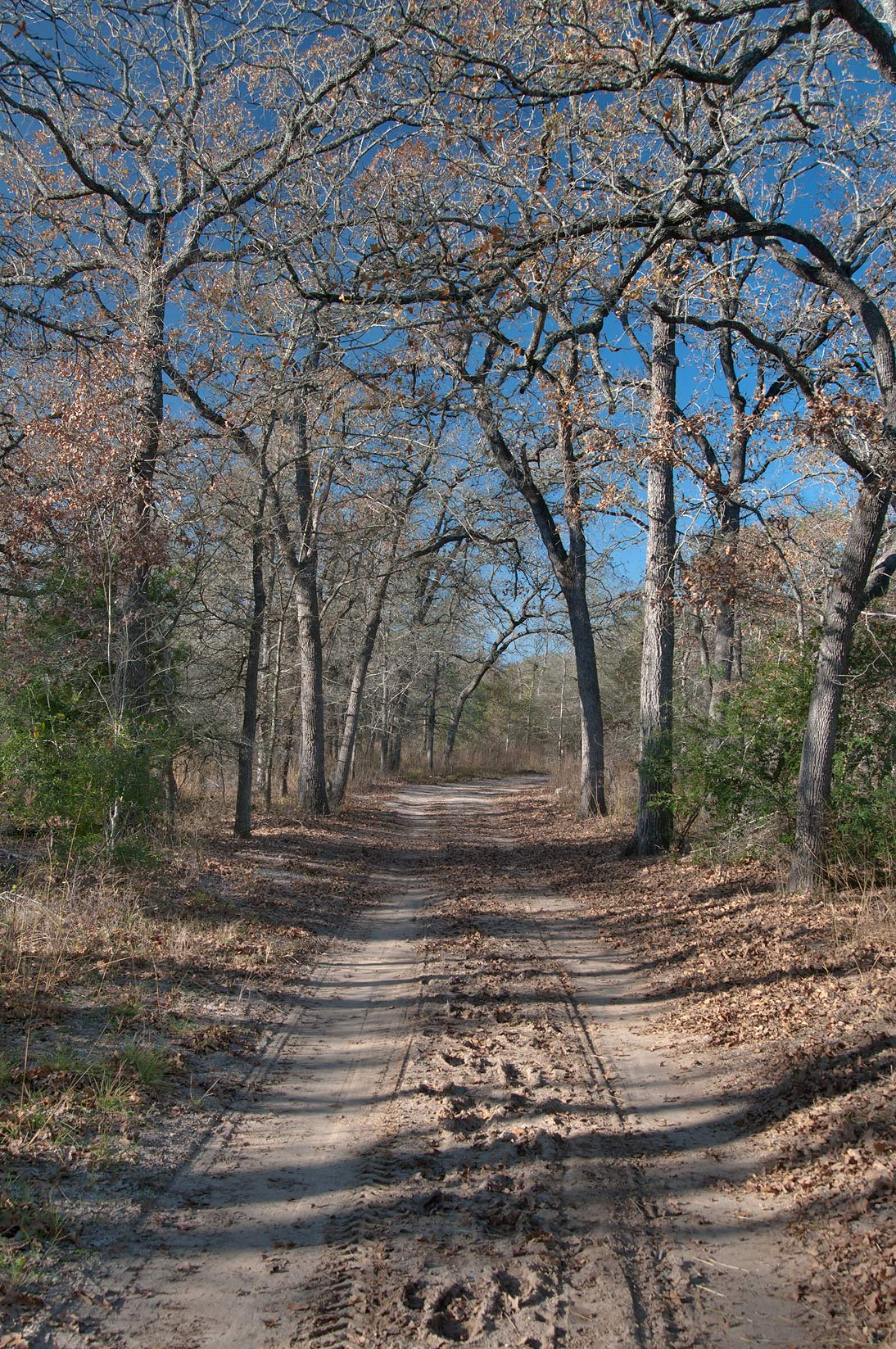Road in Birch Creek Unit of Somerville Lake State Park. Texas