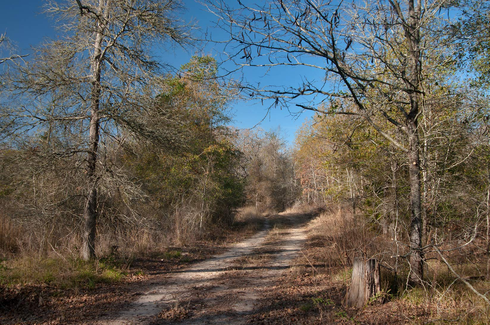 Road around the lake in Birch Creek Unit of Somerville Lake State Park. Texas