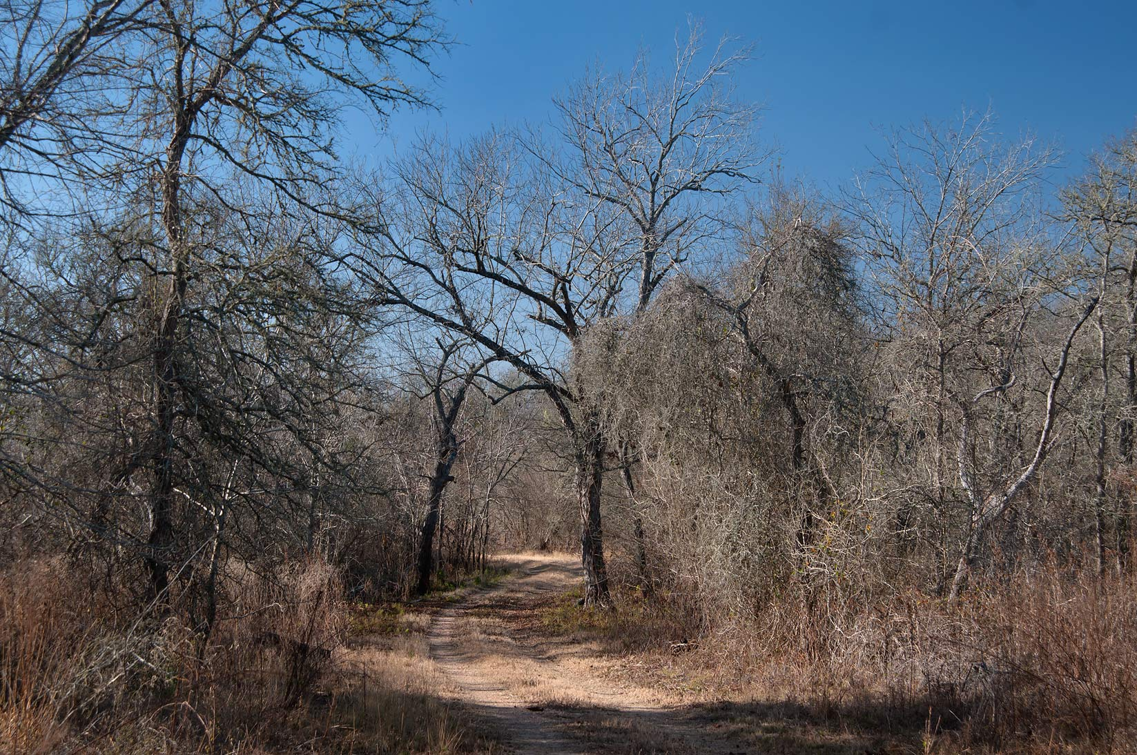 Winter forest in Birch Creek Unit of Somerville Lake State Park. Texas
