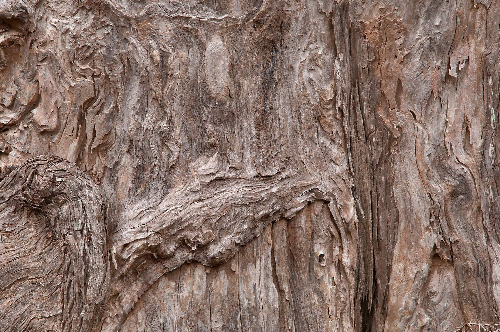 Texture of cypress tree stump in Hamilton Pool Preserve, west from Austin. Texas
