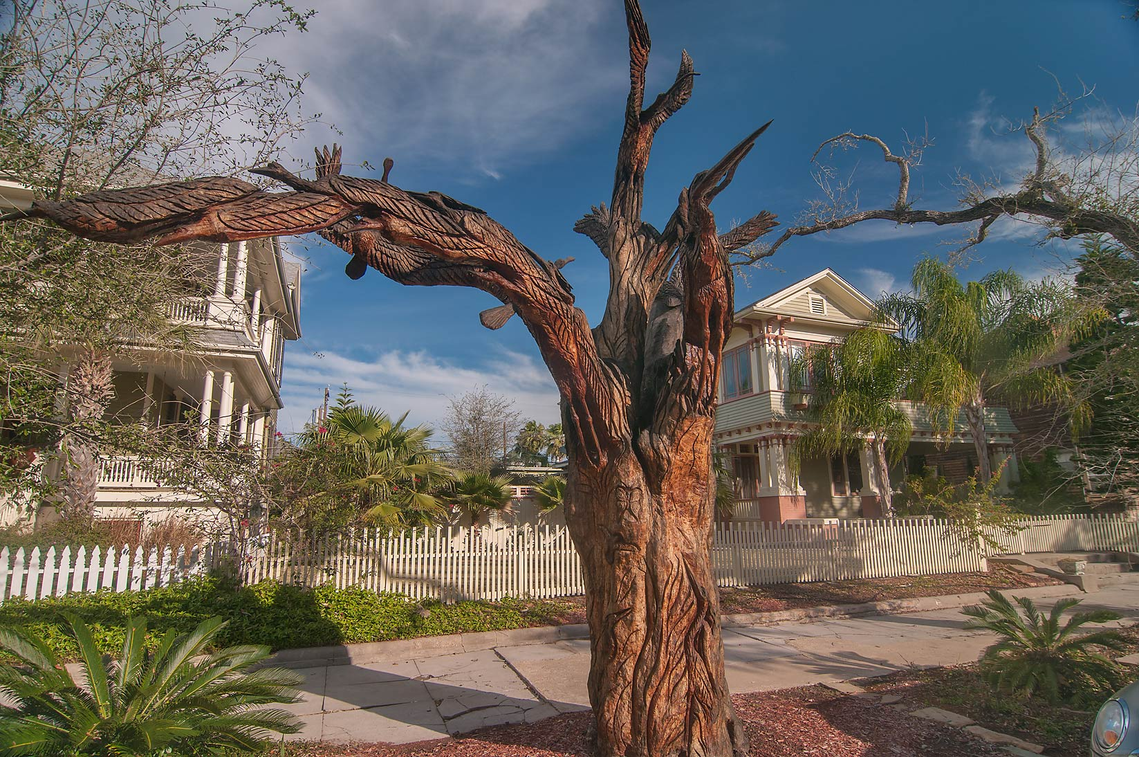 Decorated dead tree at 1601-1699 Sealy Ave. in...Historic District. Galveston, Texas