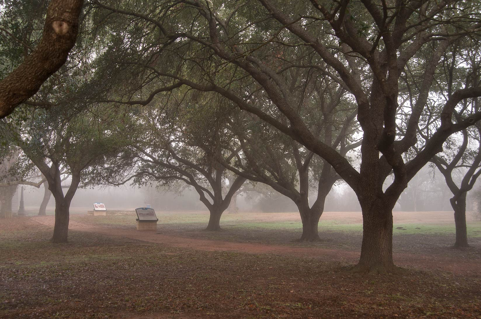 Oak alley in Washington-on-the-Brazos State Historic Site. Washington, Texas