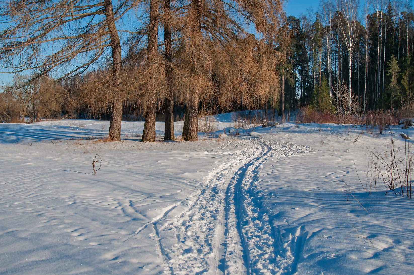 Ski tracks on Slavianka Valley near Tiarlevo...a suburb of St.Petersburg, Russia