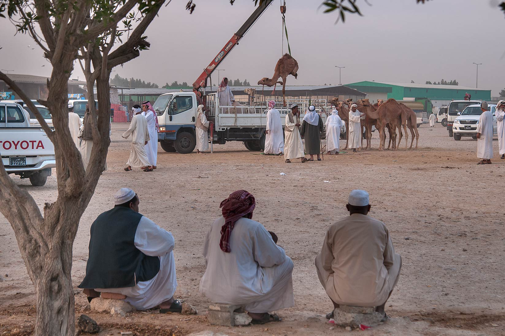 Area of in Camel Market, Wholesale Markets area. Doha, Qatar