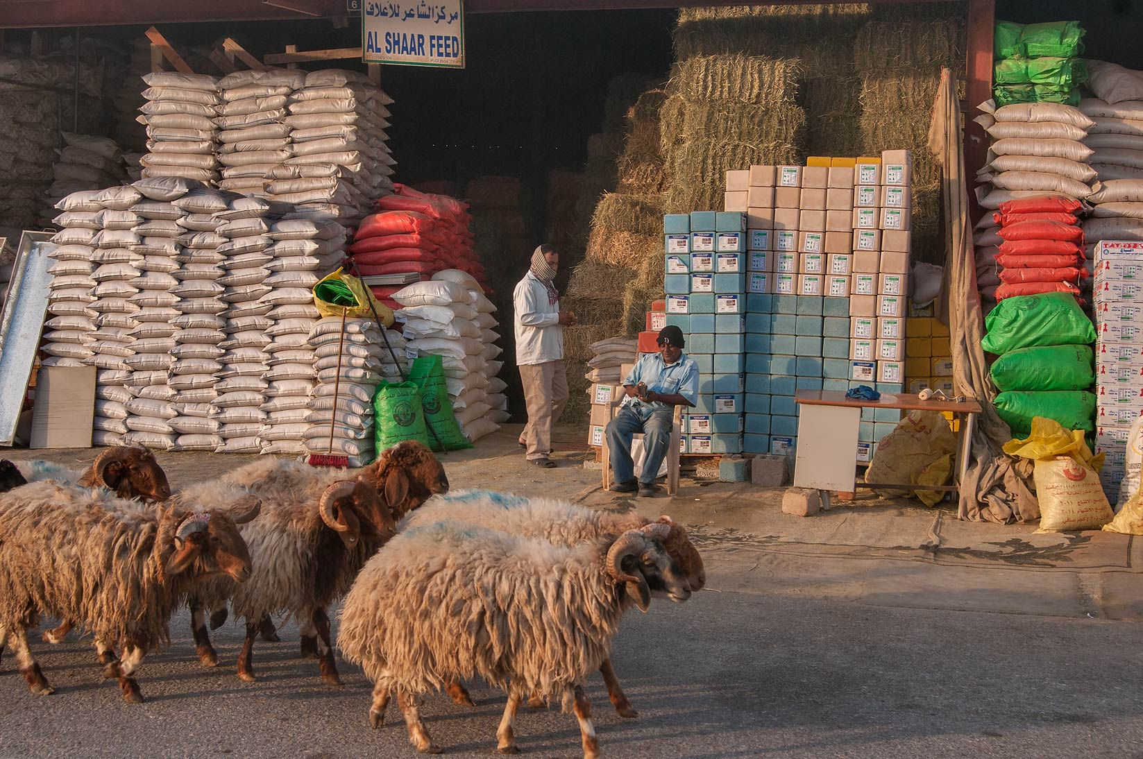 Sheep herd moving in Livestock Market, Wholesale Markets area. Doha, Qatar
