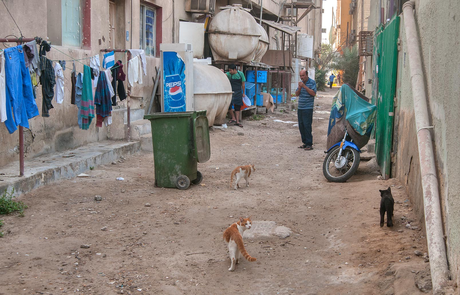 Alleyway with cats near Abdullah Bin Thani St., Musheirib area. Doha, Qatar