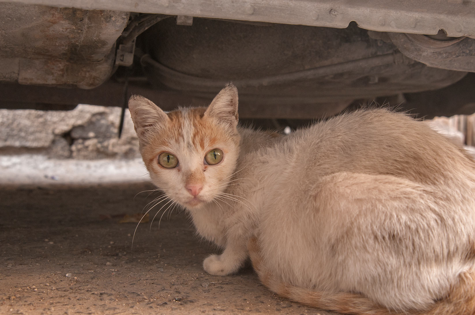 Dusty cat under a car near Al Jassasiya St., Musheirib area. Doha, Qatar